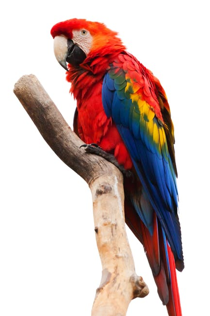 animal-ara-macao-beak-bird-40984.jpeg