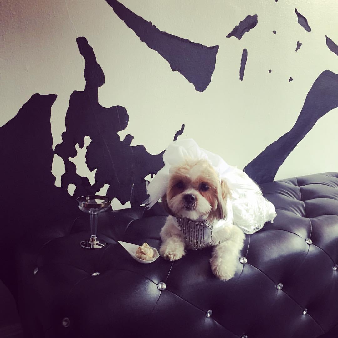 Dog Wedding Client