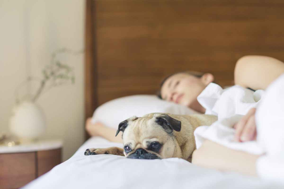 Pet Proofing YourHome